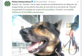 Cadela farejadora Sombra é jurada de morte por traficantes na Colômbia