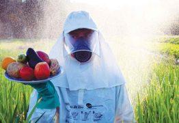 O Brasil é o campeão mundial no uso de pesticidas: ENTENDA