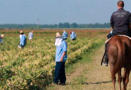 Neste momento, existem negros submetidos a trabalhos forçados – Por Estevam Dedalus
