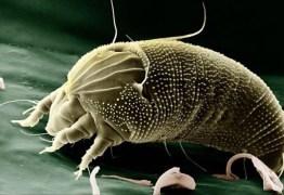 As nanorreflexões de um ácaro de Palácio – por Mario Rosa