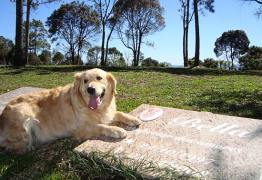 MERCADO DA MORTE: Saiba tudo sobre o pioneiro cemitério para animais na Paraíba