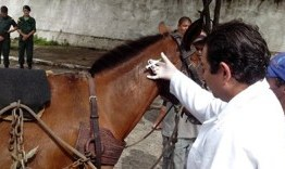 Centro de Zoonoses realiza chipagem de animais