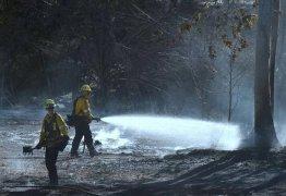 TRÊS FOCOS: incêndios na Califórnia mata 31 pessoas e continua se alastrando
