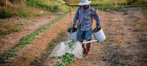 trabalhadores rurais 300x136 - Região Nordeste perdeu 1 milhão de trabalhadores rurais de 2012 a 2017