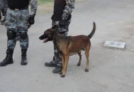 Agentes encontram euros, dólares, pesos e outra moedas com Pezão durante vistoria em cadeia