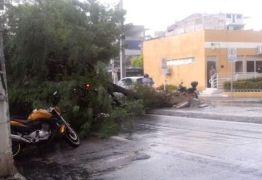 Forte ventania derruba árvores e causa danos na Ceasa em Patos