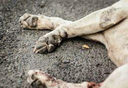 Homem esfaqueia cachorro no meio da rua em Santa Rita