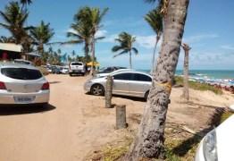 Márcia Lucena anuncia medidas emergenciais após vândalos arrancarem coqueiros recém-plantados em Conde