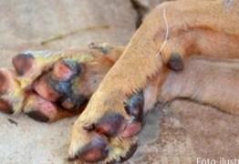 Polícia procura suspeito de matar cachorro a facadas em Catolé do Rocha