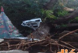 Energisa monta força tarefa após forte temporal na região de Sousa