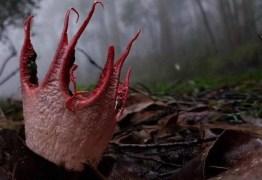 Fungo 'alienígena' é visto em floresta na China