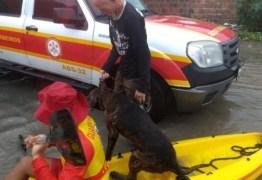 UM RESGATE ANIMAL: Bombeiros usam caiaques para resgatar pessoas e um cachorro que estavam ilhados após chuvas em João Pessoa
