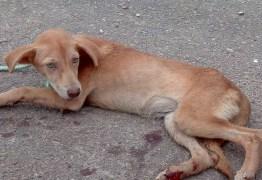 Vídeo de cachorro sendo arrastado no asfalto por moto gera revolta nas redes sociais; assista