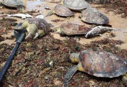 Tartarugas são encontradas mortas em praia de João Pessoa – VEJA VÍDEO