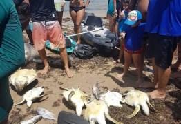 PROTEÇÃO AMBIENTAL: Governo estuda proibir rede de pesca de Cabedelo ao Seixas