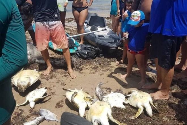 bessa   tartarugas 300x200 - PROTEÇÃO AMBIENTAL: Governo estuda proibir rede de pesca de Cabedelo ao Seixas