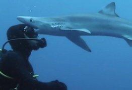 Tubarão 'beija' a cabeça de cientista durante mergulho na África do Sul