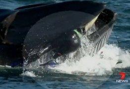Mergulhador acaba na boca de baleia, mas consegue escapar