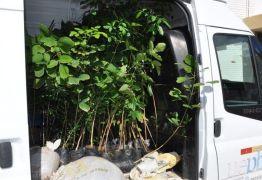 Projeto da UEPB distribui mudas de árvores em Lagoa Seca e Catolé do Rocha
