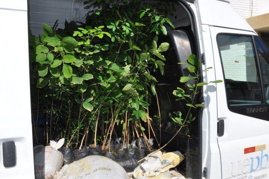 doacao de mudas   uepb - Projeto da UEPB distribui mudas de árvores em Lagoa Seca e Catolé do Rocha