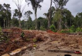 CORRUPÇÃO: Operação em 8 estados e no DF mira esquema de desmatamento ilegal na Amazônia