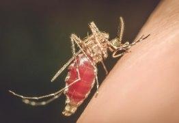 Secretaria de Saúde confirma 10º caso de malária e 1ª morte está sob investigação