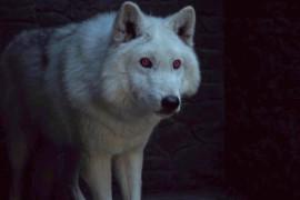 AAB5WYm - Game of Thrones dobrou número de huskies siberianos abandonados