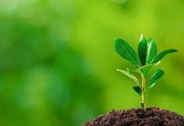 Semana do Meio Ambiente começa próxima segunda em Santa Rita
