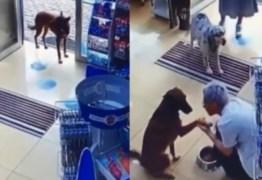 Cadela entra em farmácia e mostra pata machucada – VEJA VÍDEO