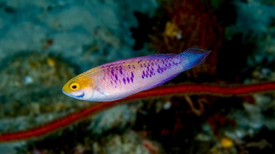 19105959707104 - Wakanda vira nome de espécie recém-descoberta de peixe