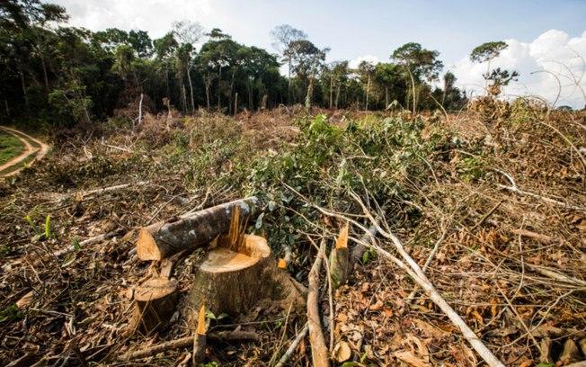 7l91htc4thtr63o3m02mei3u9 - Municípios com maior número de queimadas tiveram as maiores taxas de desmatamento, diz pesquisa