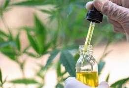ROTA DE COALISÃO: Anvisa diz que 'Governo não pode deturpar uso da maconha medicinal'