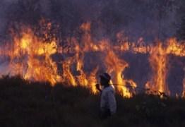QUEIMADAS: A África arde ainda mais do que a Amazônia: VEJA VÍDEO