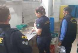 Operação da Polícia Federal apreende 4,5 toneladas de camarões comercializados de forma clandestina – VEJA VÍDEO