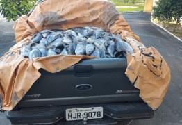 400 KG DE ATUM ESTRAGADO: PRF apreende carga que seria comercializada na feira de Cabedelo – VEJA VÍDEO