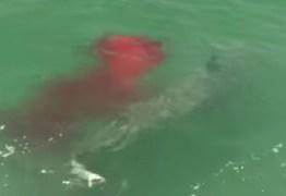 Ataque de tubarão-martelo é flagrado por pescadores – VEJA VÍDEO