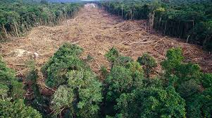 download 10 - Sudeste será região mais afetada por desmate da Amazônia, diz líder do IPCC
