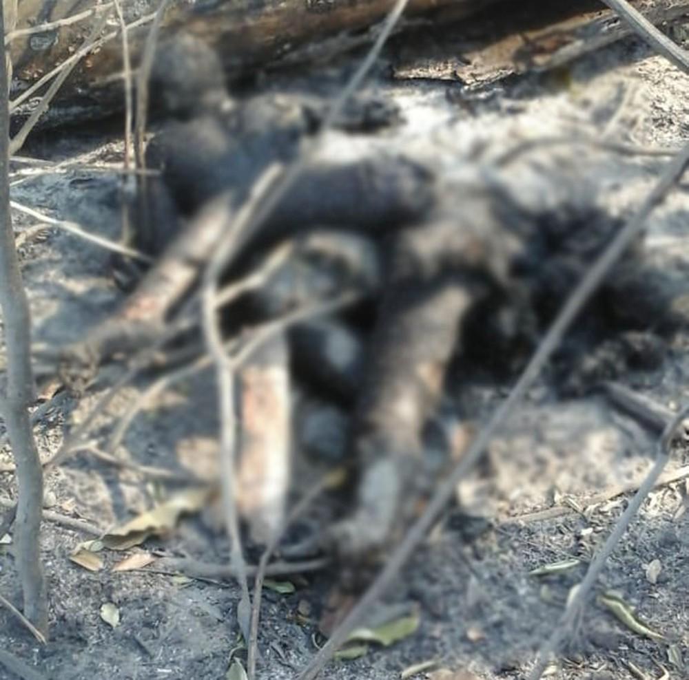imagem corpo de idosos mortos no galo velho machadinho do oeste 1  - Casal morre abraçado ao tentar fugir de queimada em Rondônia - IMAGENS FORTES