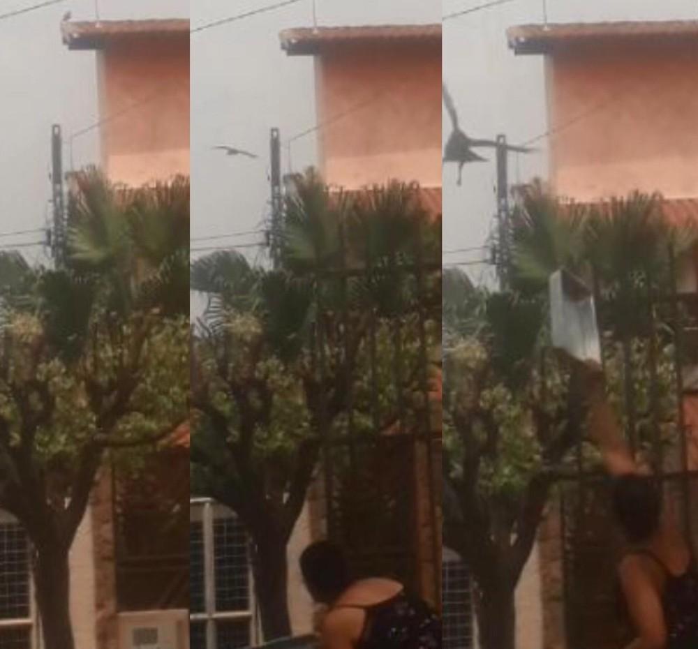 7c255220 5a7b 4ce9 8ee9 2907df1a9044 - NINHO DE GAVIÃO: Vídeo mostra ataque de ave que 'persegue' moradora há um mês - ASSISTA
