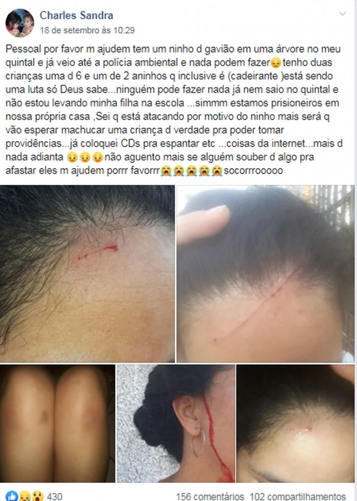 cats 1 729x1024 - NINHO DE GAVIÃO: Vídeo mostra ataque de ave que 'persegue' moradora há um mês - ASSISTA