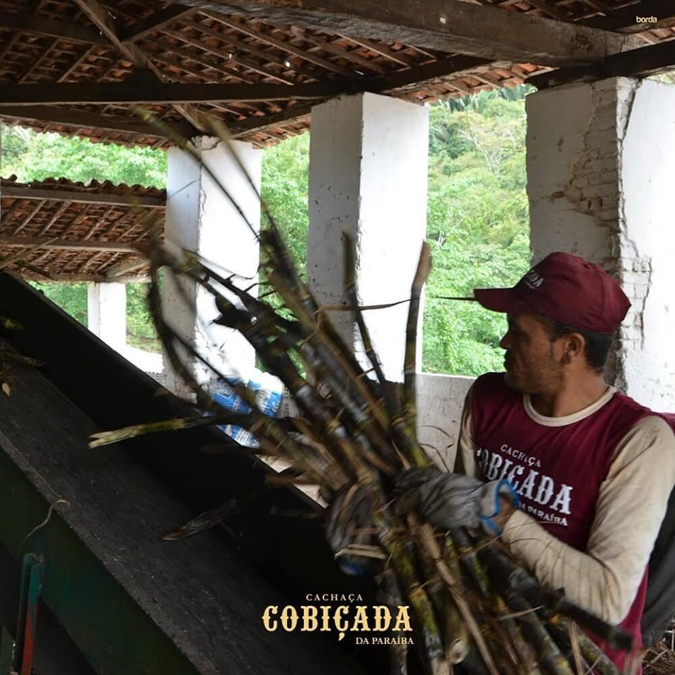 cob01 - NA ROTA DA CANA: A Cobiçada produz uma cachaça 'tipo exportação' na cidade de Serraria