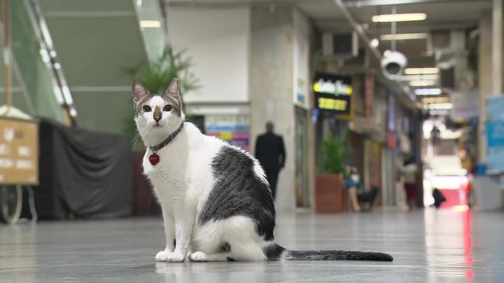 gato rubinho - Gato 'ganha na justiça' direito a circular por galeria de Copacabana