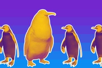 Fóssil de pinguim gigante é descoberto na Nova Zelândia