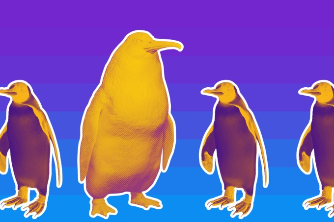 pinguim2 - Fóssil de pinguim gigante é descoberto na Nova Zelândia