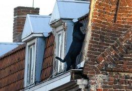 Pantera negra atravessa telhados de cidade a aterroriza moradores na França; VEJA VÍDEO