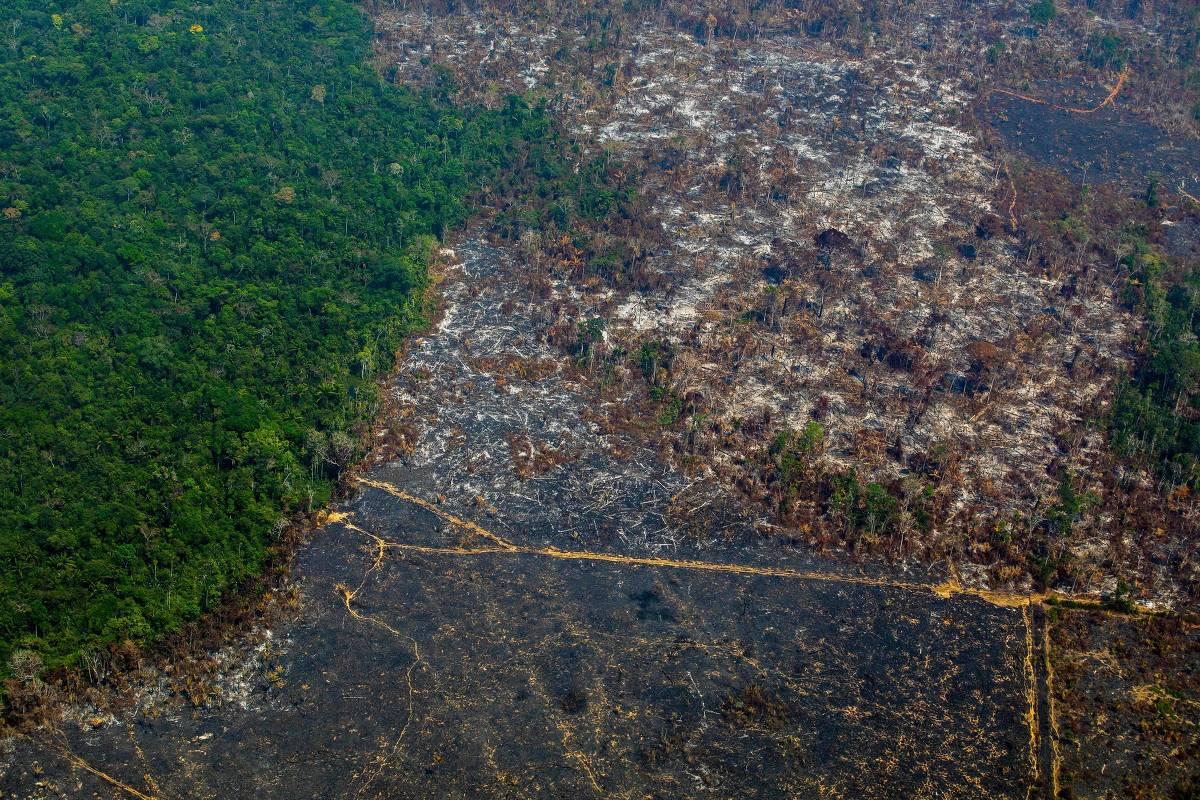 15670253635d66e8d3c9c1e 1567025363 3x2 xl - DEVASTAÇÃO NA AMAZÔNIA: desmatamento cresce 96% em setembro, alerta Inpe