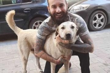 Câmera flagra homem em cena surpreendente com cachorro de rua e viraliza; VEJA VÍDEO