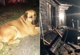 Cão acorda dono durante incêndio em casa e salva sua vida