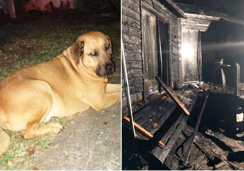 cao incendio - Cão acorda dono durante incêndio em casa e salva sua vida
