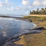 dede 1 868x644 1 - Justiça federal decide a favor do governo em ação para conter vazamento de óleo nas praias do Nordeste
